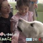 NHK BS1スペシャル「ベイリーとゆいちゃんが教えてくれたこと」